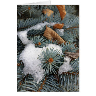 patch of snow card