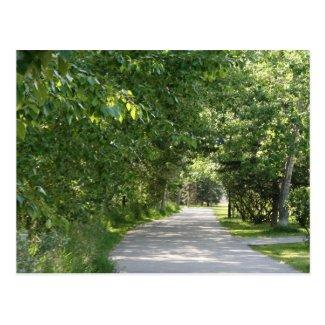 Path among trees postcard