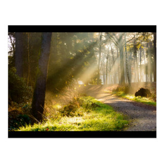 Path in forest with rays of sunlight postcard