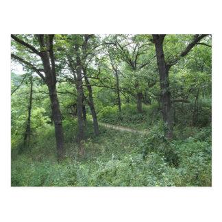 Path in Mines of Spain near Dubuque Iowa Postcard
