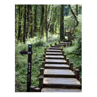Path in the Forest Postcard