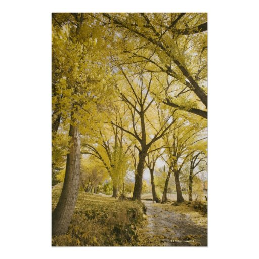 Path in woods, Sugarhouse Park, Salt Lake City Poster