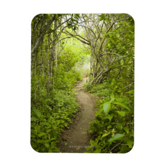 Path through the forest vinyl magnet