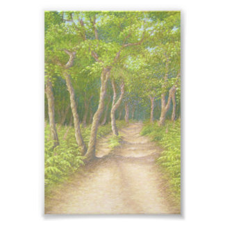 Path Through Trees, Leith Hill Photographic Print