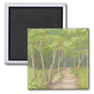 Path Through Trees, Leith Hill, Surrey in Pastel Square Magnet