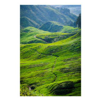 Path thru tea plantations poster