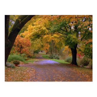 Path to Fall Postcard