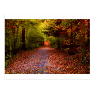 Paths in Nature Postcard