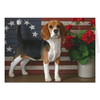 Patriotic Beagle Card