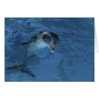 Pat's Dolphin - birthday card