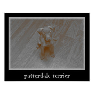 Patterdale Terrier Aged Photograph Poster