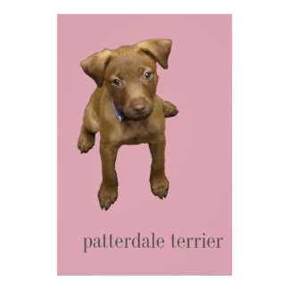 Patterdale Terrier Puppy Poster - Pink
