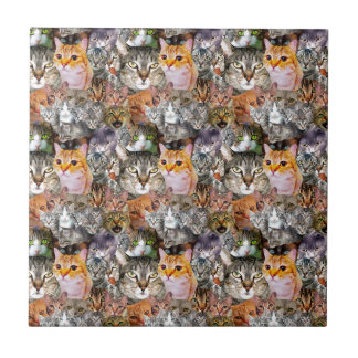 Pattern Cats Tile
