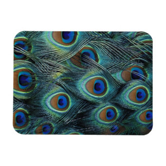 Pattern in male peacock feathers rectangular photo magnet