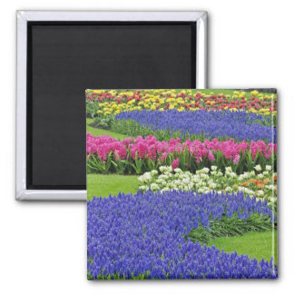 Pattern of Grape Hyacinth, tulips, and 3 Square Magnet