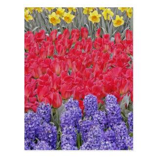 Pattern of hyacinth, tulips, and daffodils, postcard