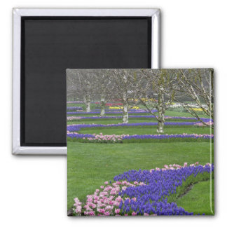 Pattern of tulips and Grape Hyacinth flowers, 4 Square Magnet