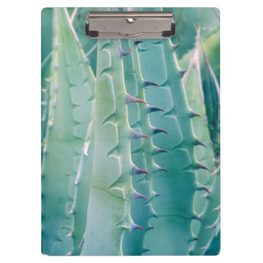 Patterns of an Agave plant Clipboards