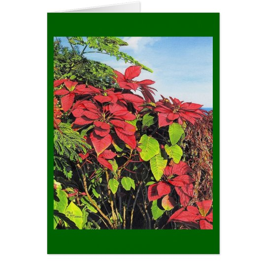 "Paul McGehee ""Poinsettias"" Christmas Card"