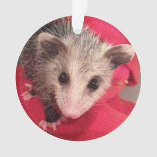 Paulee the Little O'Possum from Southern Indiana