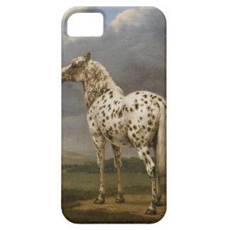 "Paulus Potter - The ""Piebald"" Horse. Vintage Image iPhone 5 Case"