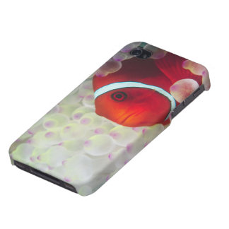 Paupau New Guinea, Great Barrier Reef, iPhone 4/4S Cover