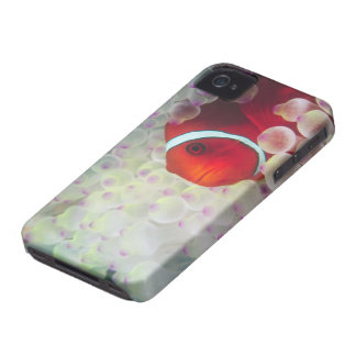 Paupau New Guinea, Great Barrier Reef, iPhone 4 Case-Mate Cases