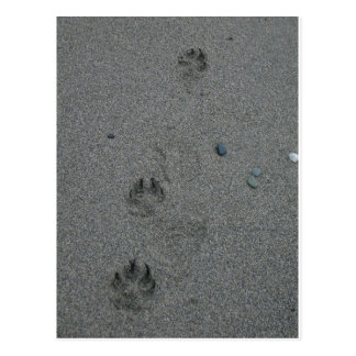 Paw Prints in the Sand Postcard