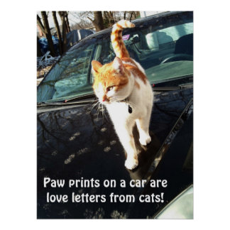 Paw Prints On A Car Are Love Letters From Cats