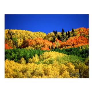 Paysage d'automne cartes postales