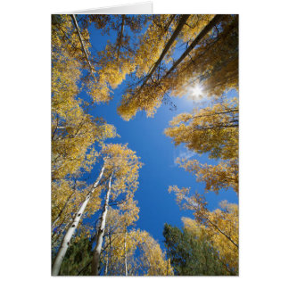 Peace and serenity in the Aspen's Card