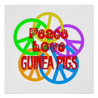 Peace Love Guinea Pigs Poster