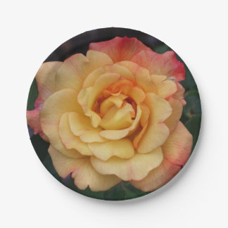Peace Rose Beautiful Pink and Yellow Floral Paper Plate