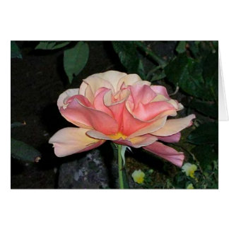 Peace Rose Card