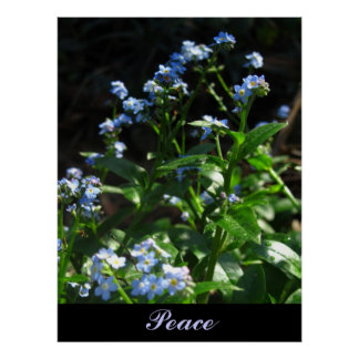 Peace Text In Light Blue Poster