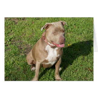 Peaceful Pitbull Greeting Cards