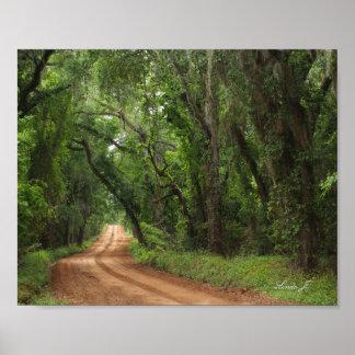 Peaceful Plantation Road in GA Canvas Print