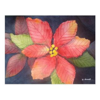 Peaceful Poinsettia Post Card