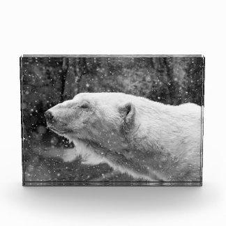 Peaceful Polar Bear