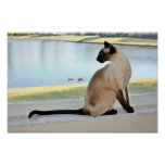 Peaceful Siamese Cat Painting Poster