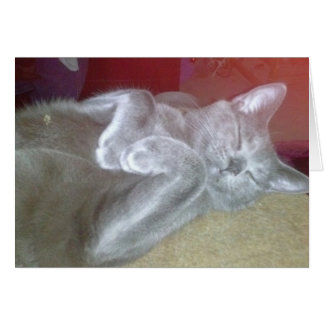 Peaceful sleeping cat card