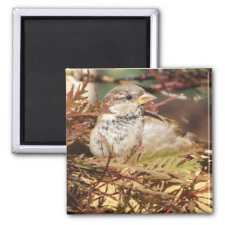 Peaceful Sparrow Magnet