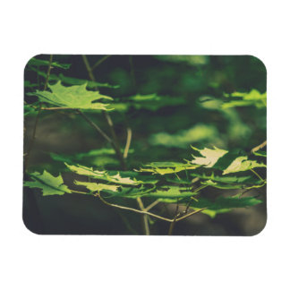 Peaceful Sunlit Forest Leaves Green Nature Magnet