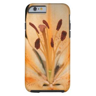 Peach Asiatic Lily Closeup IPhone Case