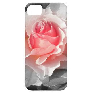 Peach Bliss Rose iPhone 5 Case