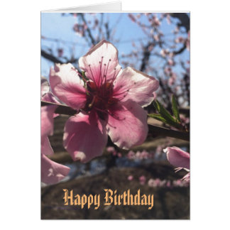 Peach Blossom Birthday Greetings Card