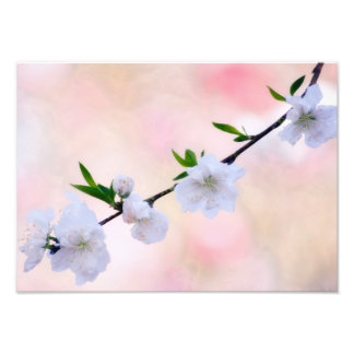 Peach Blossom Photo Print