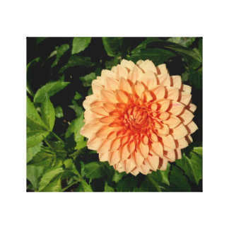 Peach Dahlia photo on stretched canvas