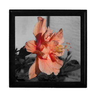 Peach Double Hibiscus Flower Selective Color Photo Gift Box