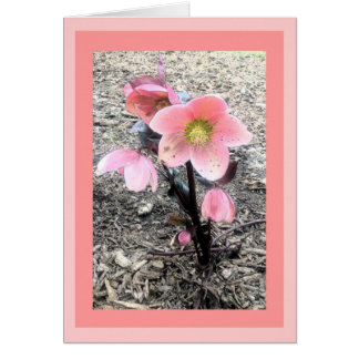 Peach Flower Card